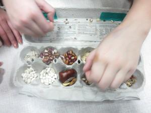Seed Sorting 2
